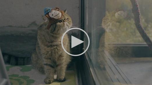 video gato 2